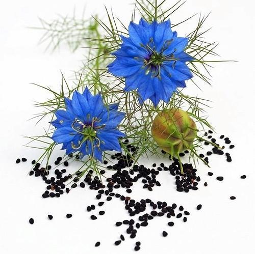 Piccolo seme nero benedetto